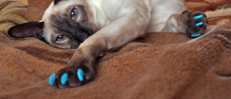 Колпачки на когти кошек