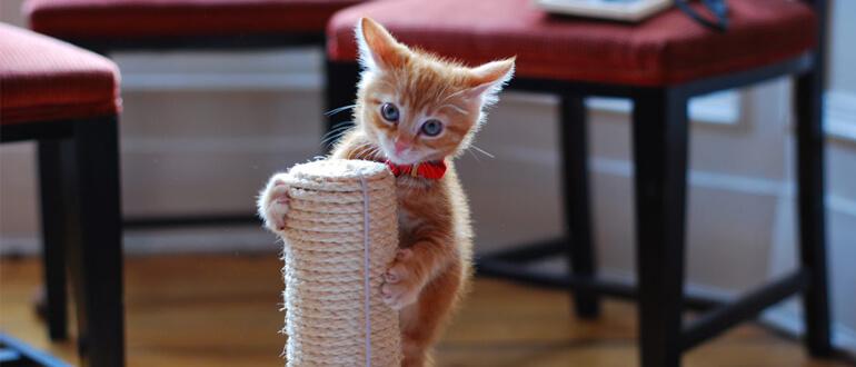 Как быстро приучить котенка к контеточке