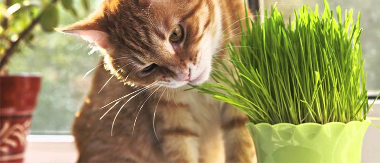 Отучаем кошку грызть цветы
