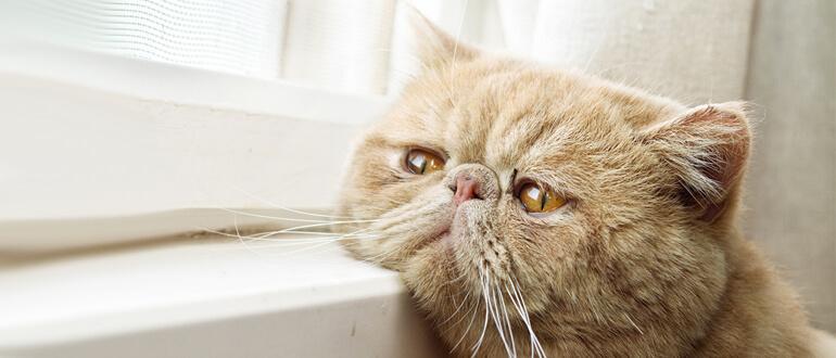 Больной котик