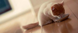 Котенок лакает с миски