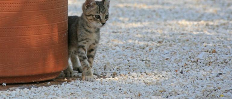 Определяем пол котенка