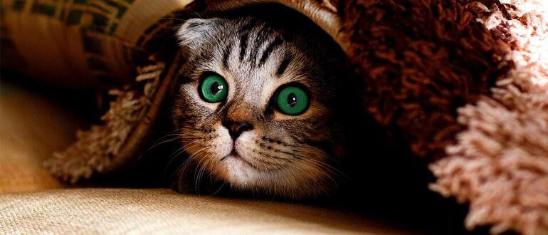 Оставляем котенка одного дома