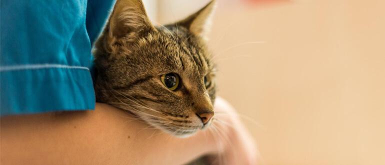 Нужно ли делать прививки кошке