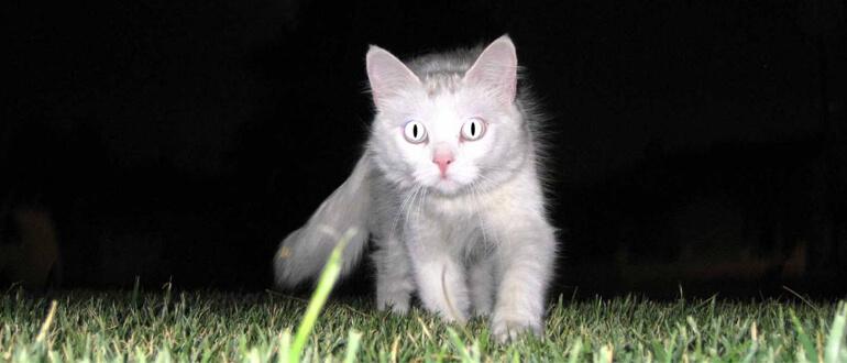 Котенок гуляет ночью