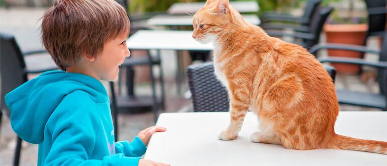 Мальчик играет с кошкой