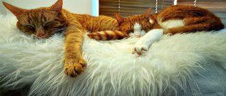 Кот и кошка послевязки