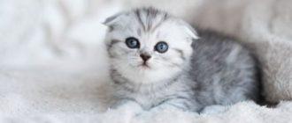 как назвать серую кошку девочку