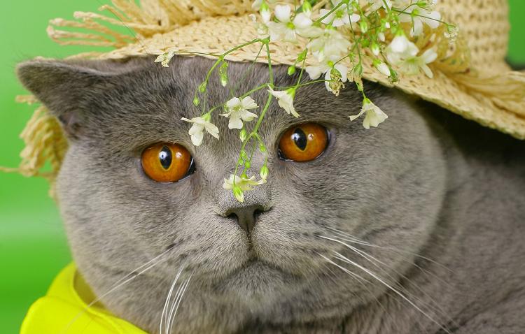 Клички для котов мальчиков легкие и красивые