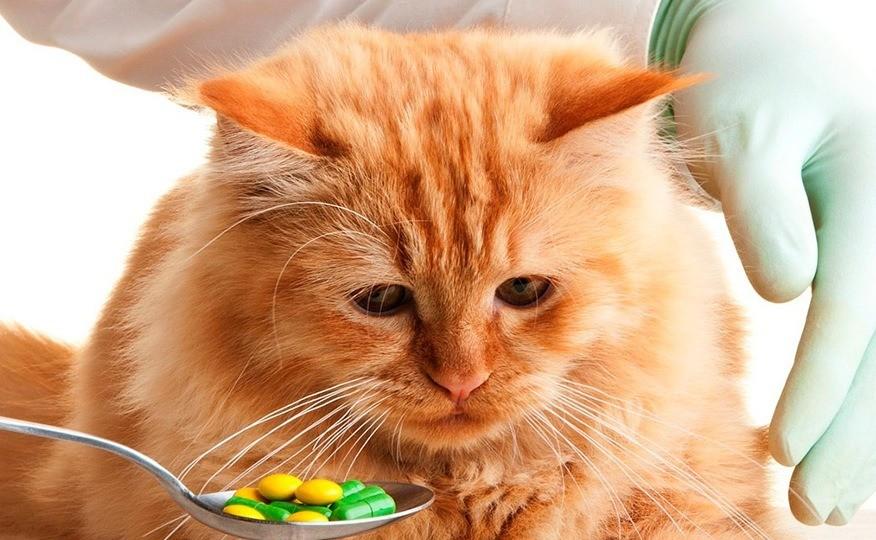 Почему кот не ест: основные причины, как помочь, когда нужна помощь ветеринара