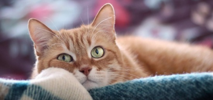 как сделать укол коту