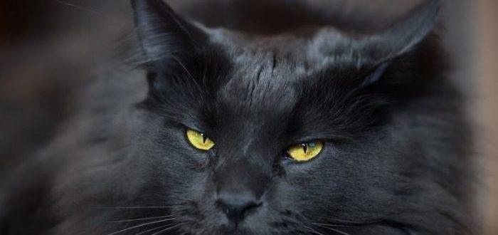 как назвать черного котенка мальчика