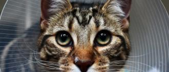 как лечить лишай у кота