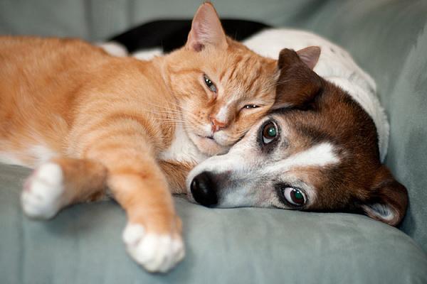 Несколько питомцев в доме: совместимость и особенности ухода