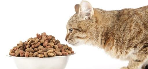 Как правильно кормить свою кошку или кота?