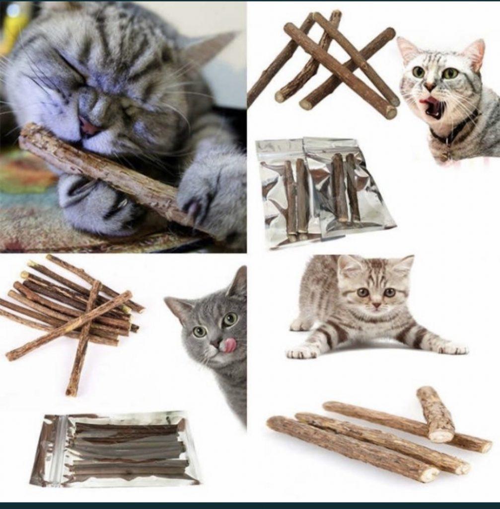 Кошачья мята для кошек и котов