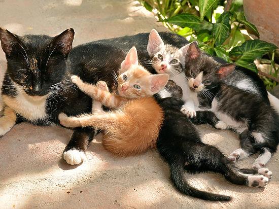 Препарат гамавит для котов и кошек